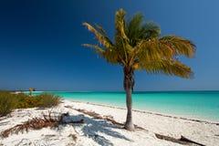 Palm tree. In Cayo Largo in Cuba Stock Photo