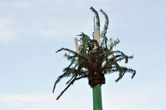 Palm tree cell tower Royalty Free Stock Photos