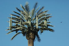 Palm Tree Cell Tower and Bird Royalty Free Stock Images
