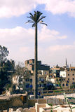 Palm tree cell tower. In cairo in egypt Royalty Free Stock Photography