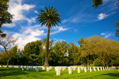 Palm Tree in Cemetery Stock Photography