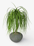 Palm Tree in a Ceramic Flowerpot Stock Photos