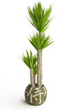 Palm Tree in a Ceramic Pot Royalty Free Stock Photo