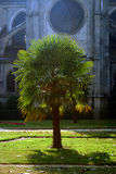 Palm tree on church yard. Palm tree in front of cathedral Stock Images