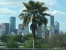 Palm tree. City skyline Cloudy day Summertime fun Stock Photos