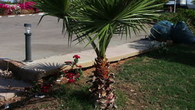 Palm tree on a city street stock video footage