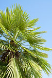 Palm tree and clear sky Stock Photos