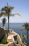 Palm Tree at Cliff Diving Loca Stock Photography