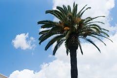 Palm. Tree climate sky palm sunlight Stock Image