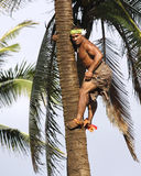 Palm Tree Climber Stock Images