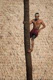 Palm tree climber Stock Photography
