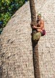 Palm tree climber Stock Photo