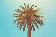 Palm Tree close up. Stock Photo