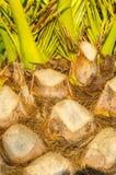Palm tree close up Stock Photo