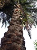 Palm. Tree  close-up low angle Royalty Free Stock Images