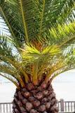 Palm tree close up view Stock Photo