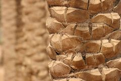 Palm tree closeup Stock Photo