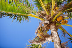 Palm tree closeup Stock Image