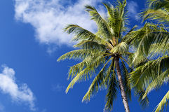 Palm Tree with Clouds Royalty Free Stock Photo