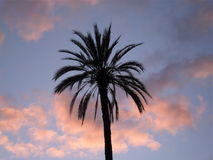 Palm tree. A palm tree among clouds Royalty Free Stock Photos