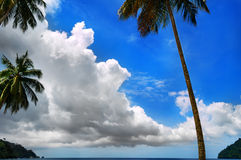 Palm tree, clouds and blue sky 2 Royalty Free Stock Image