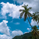 Palm tree, clouds and blue sky Stock Photo