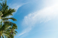 Palm tree with clouds and blue sky Stock Images