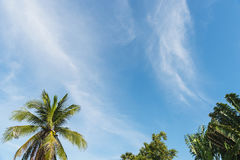 Palm tree with clouds and blue sky Royalty Free Stock Photography