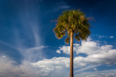 Palm tree and clouds in the sky in Clearwater Beach, Florida. Stock Images