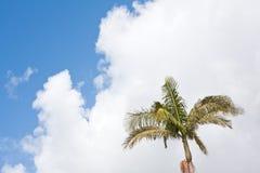 Palm Tree & Cloudscape stock images