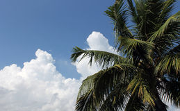 Palm tree and cloudscape. Scenic view of leafy green palm tree with blue sky and cloudscape background Royalty Free Stock Photos