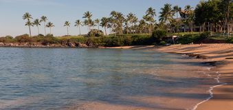 Palm tree coast Stock Image