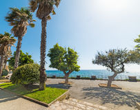 Palm tree by the coast in Alghero Stock Photography