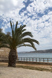 Palm Tree at the Coast Royalty Free Stock Images