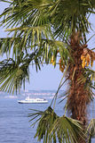 Palm tree on coast Stock Photo
