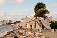 Palm Tree by Coastal Hacienda Royalty Free Stock Image