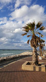 Palm tree on coastline of Mediterranean Sea in Haifa, Israel. Palm tree, blue sky with white clouds, seafront of Mediterranean Sea, beautiful sunny day on the Royalty Free Stock Photography