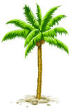 Palm tree with coconut fruits Royalty Free Stock Photos