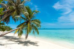 Palm tree coconut tree on white sand beach royalty free stock photography