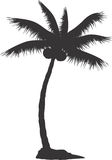 Palm tree. With coconut on white background Stock Image