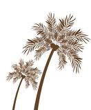 Palm tree with coconut in white background. Vector illustration design stock illustration