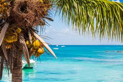 Palm tree with coconuts on the background of the sea in Bayahibe, La Altagracia, Dominican Republic. Copy space for text. Stock Image