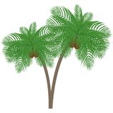 Palm tree with coconuts on a white background Stock Image