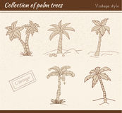 Palm Tree Collection Stock Photo