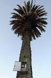 Palm Tree at Colonia del Sacramento Stock Photos