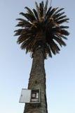 Palm Tree at Colonia del Sacramento Stock Photos