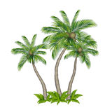 Palm tree colored Stock Images
