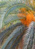 Palm tree colorful crown Stock Images