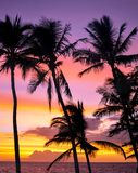 Palm Tree Colorful Sunset Maui Hawaii royalty free stock images