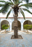 Palm Tree in Courtyard. Exotic Palm Tree in Luxurious Courtyard Royalty Free Stock Images
